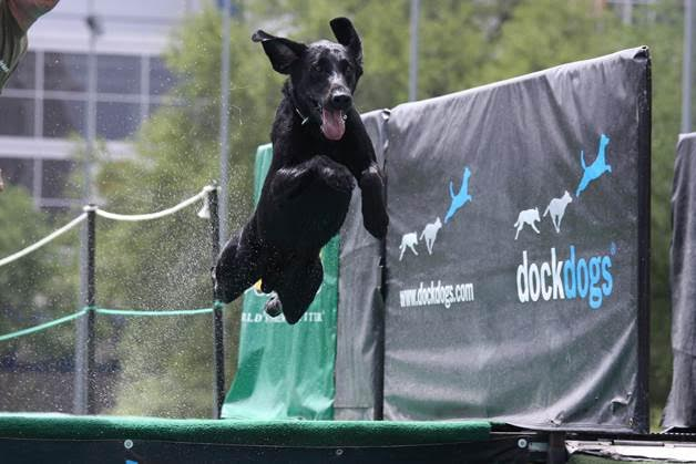Dock Dogs Competition